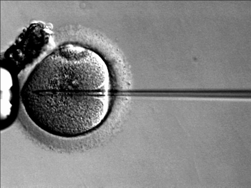 In Vitro Fertilization is a way to overcome barriers to traditional conception ... photo by CC user Ekem on wikimedia commons