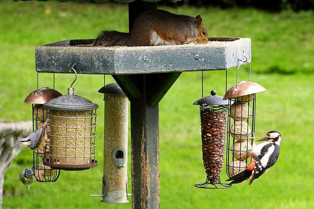 If you know How to Create a Fantastic Habitat for Birds in Your Backyard, it will be a lively place indeed